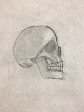 Finished skull; 2017; charcoal on paper